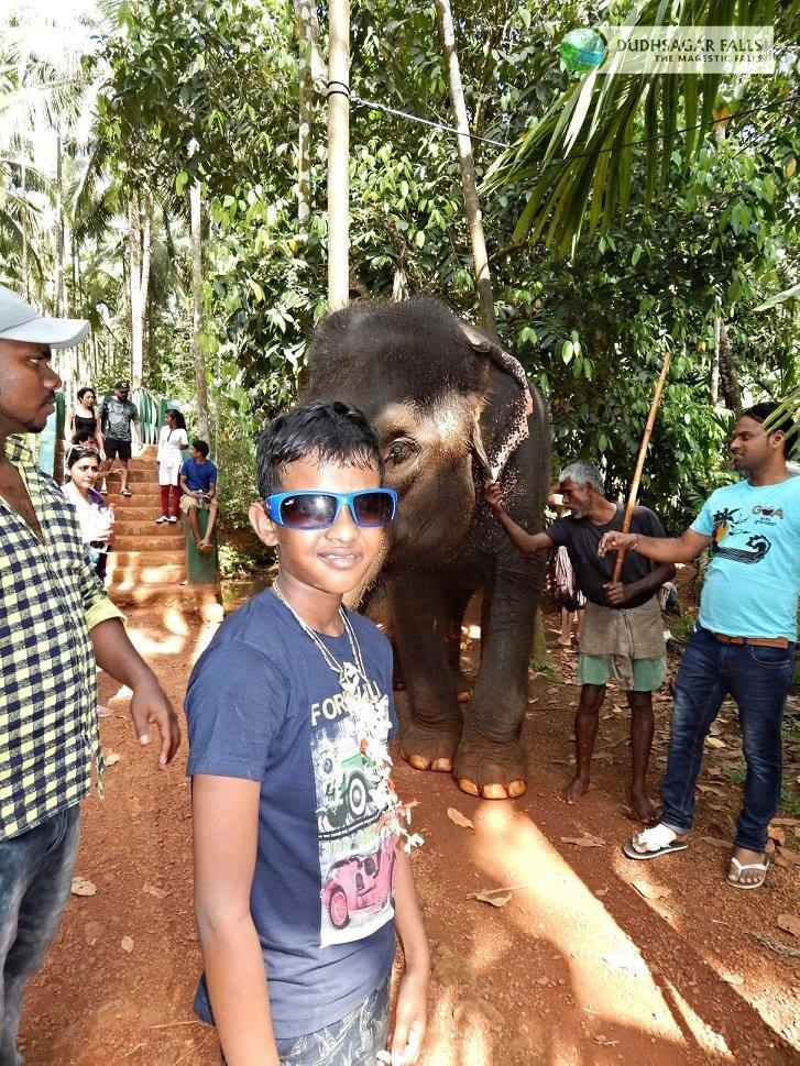 Elephant at Spice Plantation Goa-