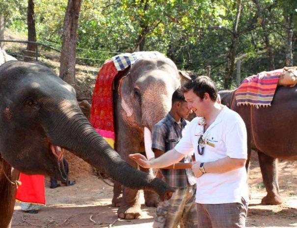 Dudhsagar-falls-elephant-safari.jpg