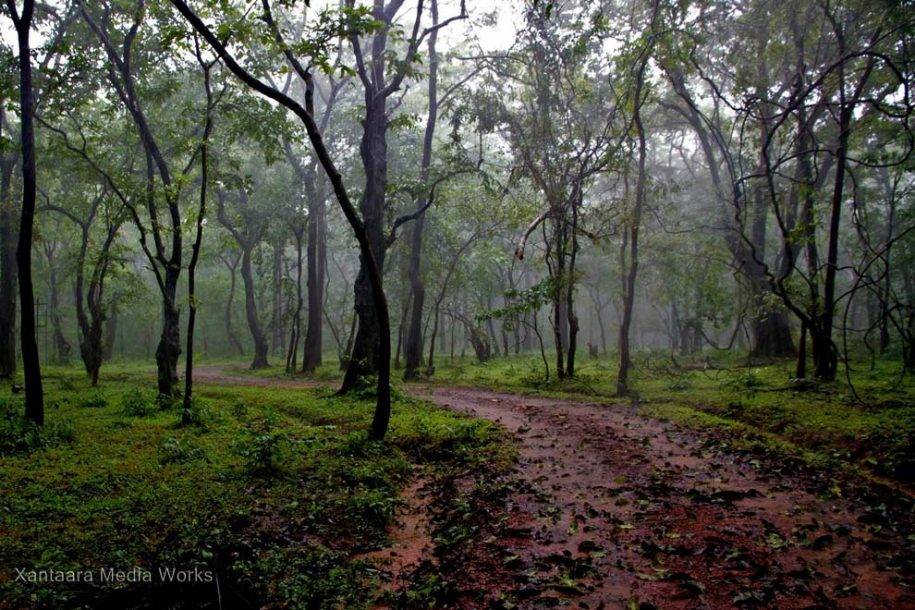 Jungle During Monsoon in Goa