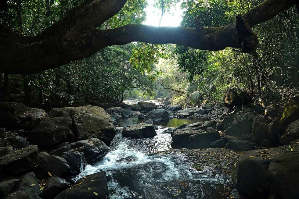 Bhagwan Mahaveer Sanctuary and Mollem National Park.